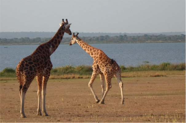 Murchison Falls Game Park