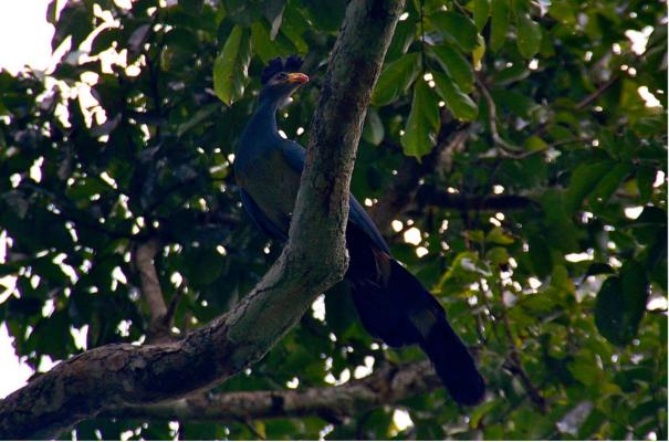 Semuliki Wildlife Reserve