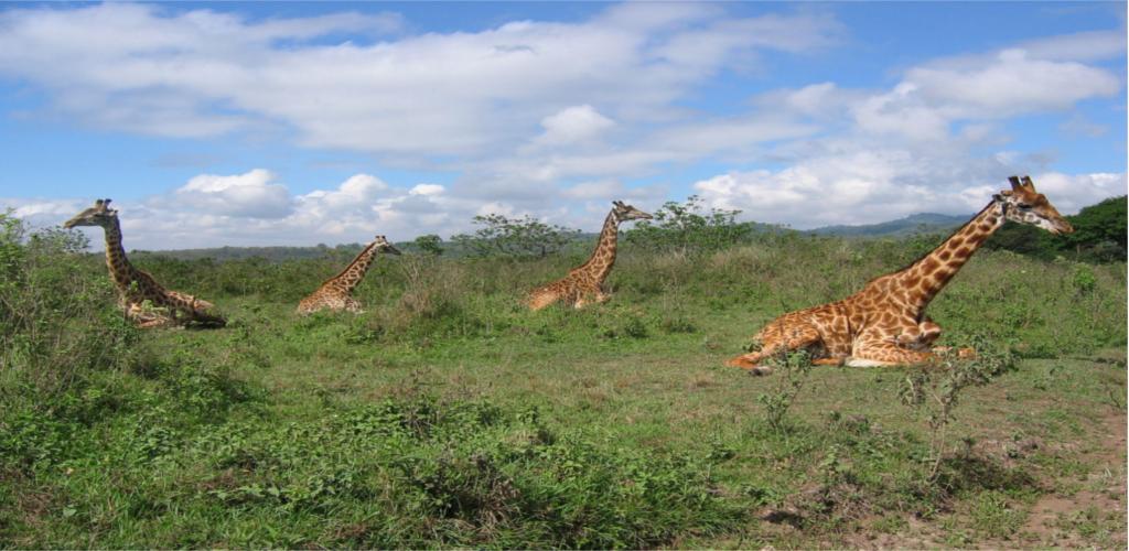 Arusha Game Park