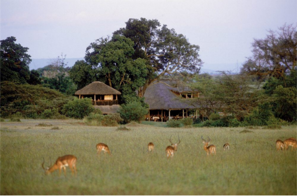 Base Camp Maasai Mara
