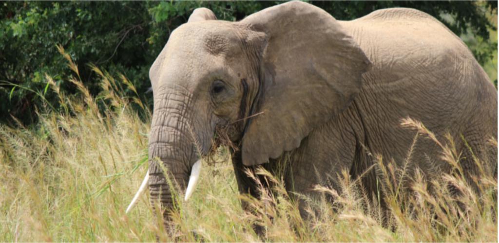 Uganda Safari Sixteen Days
