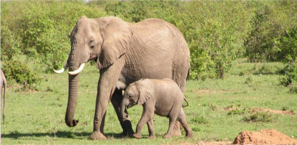 Tanzania Safari and Uganda Gorillas