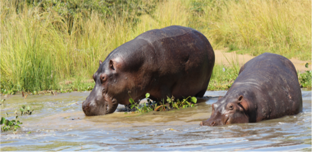 Gorilla tour, whitewater rafting and game safari
