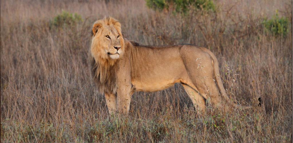Laikipia Kenya