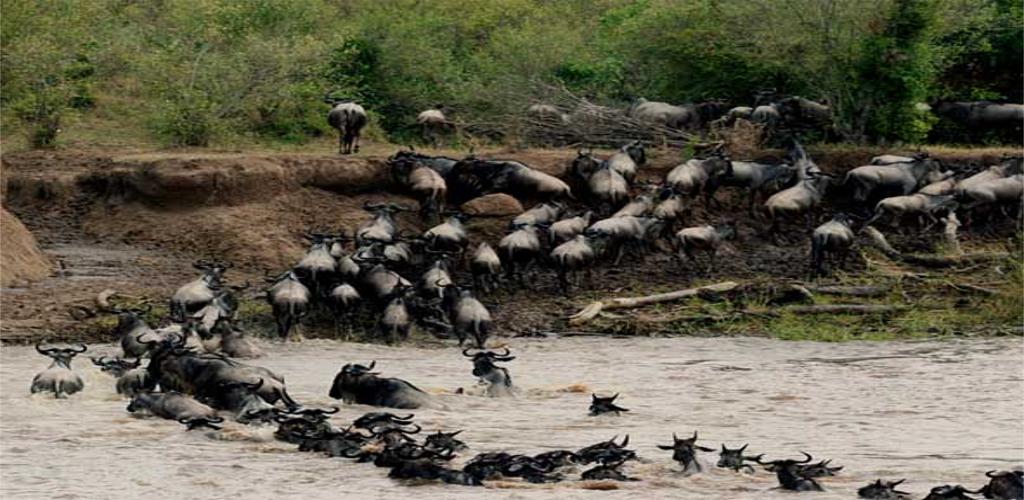Maasai Mara Kenya