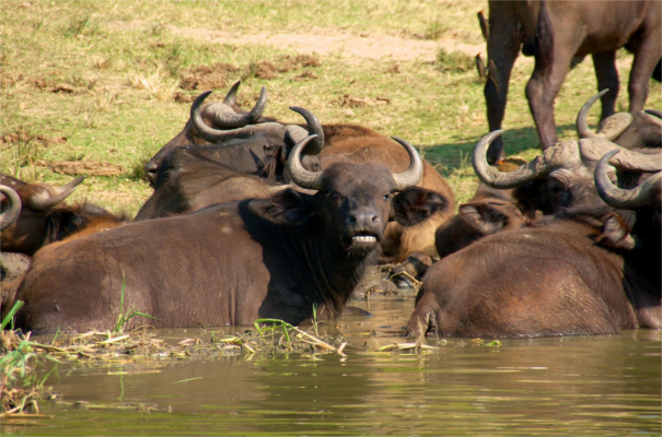 Uganda Group Tour - Ultimate Uganda Safari