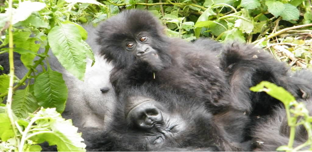 Uganda Small Group Tour - 5 Days