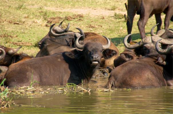 Uganda Group Tour - Ultimate Uganda Safari