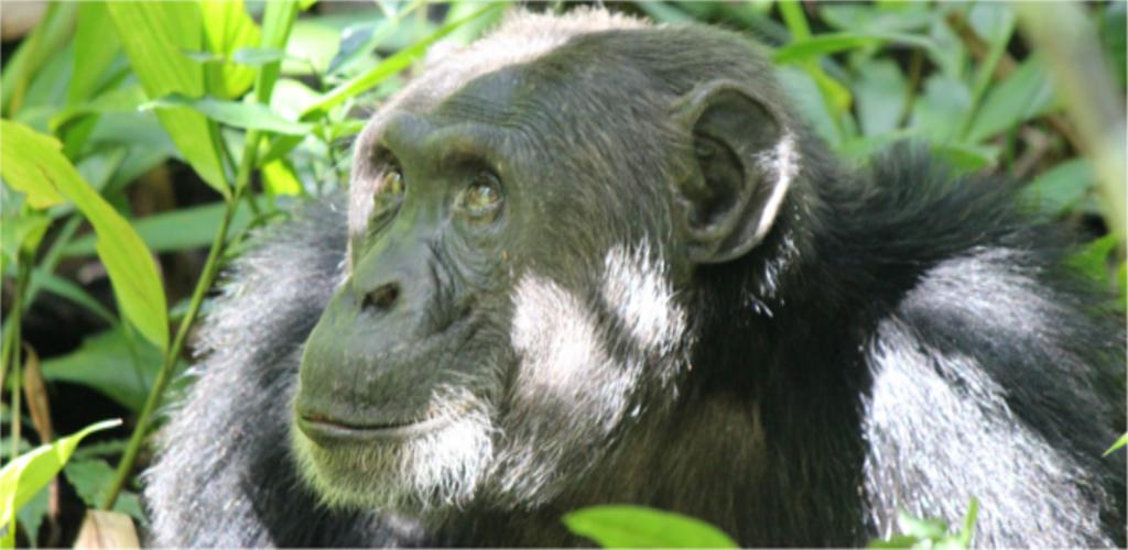 Rwanda Safari - Eight Days