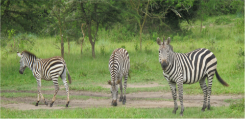 Discover Uganda